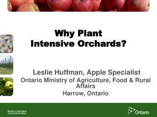 Why Plant  Intensive Orchards?