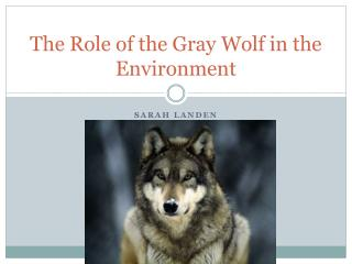 The Role of the Gray Wolf in the Environment