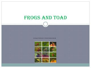Frogs and toad