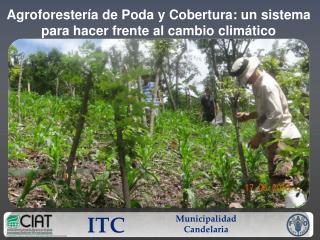 Agroforestería  de  Poda y  Cobertura: un sistema  para hacer frente al cambio climático