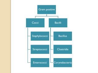 Genus Clostridium