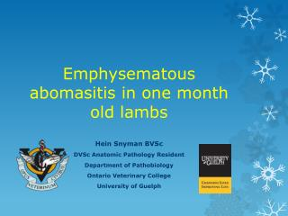 Emphysematous  abomasitis  in one month old lambs