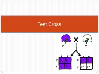 Test Cross