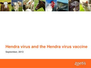 Hendra virus and the Hendra virus vaccine