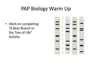 PAP Biology Warm Up