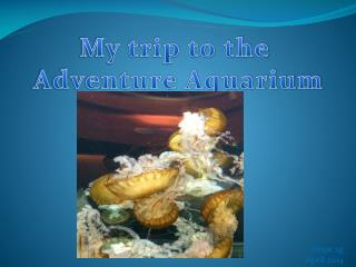 My trip to the  Adventure Aquarium