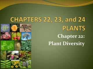 CHAPTERS 22, 23, and 24 PLANTS