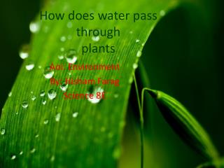 How does water pass through  plants