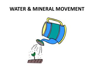 WATER & MINERAL MOVEMENT