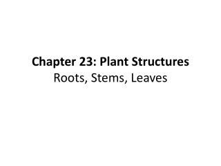Chapter 23: Plant Structures Roots, Stems, Leaves