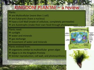 KINGDOM PLANTAE – a review