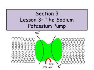 Section 3 Lesson  3 – The Sodium Potassium Pump