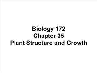 Biology 172 Chapter 35 Plant Structure and Growth