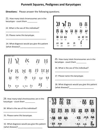 Punnett Squares, Pedigrees and Karyotypes