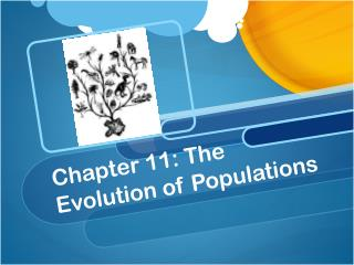 Chapter 11: The Evolution of Populations