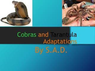 Cobras and Tarantula Adaptations
