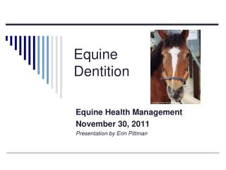Equine  Dentition