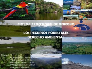 ESCUELA PROFESIONAL DE DERECHO LOS RECURSOS FORESTALES DERECHO AMBIENTAL