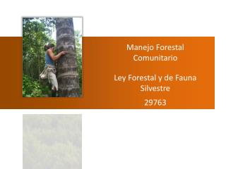 Manejo Forestal Comunitario Ley Forestal y de Fauna  S ilvestre 29763 Javier Martínez DAR