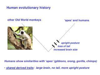 Human evolutionary history