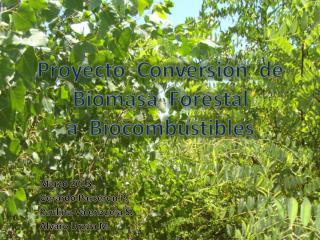 Proyecto  Conversión  de  Biomasa  Forestal a   Biocombustibles