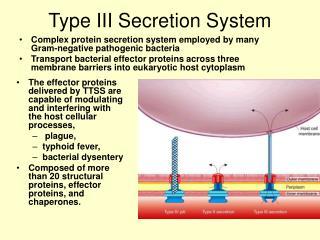 Type III Secretion System