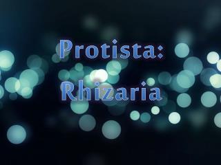 Protista :  Rhizaria