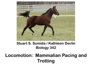 Stuart S.  Sumida / Kathleen Devlin Biology 342 Locomotion:  Mammalian  Pacing and Trotting