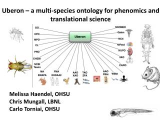 Uberon  – a multi-species ontology for  phenomics  and translational science