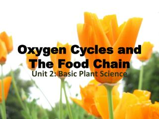 Oxygen Cycles and The Food Chain
