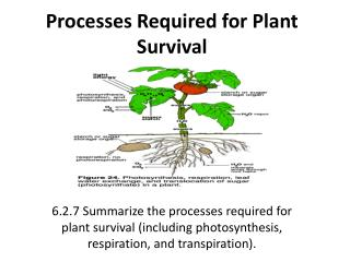Processes Required for Plant Survival