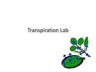 Transpiration Lab
