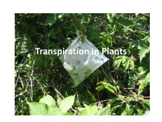 Transpiration in Plants