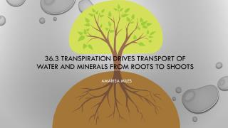 36.3 Transpiration drives transport of water and minerals from roots to shoots