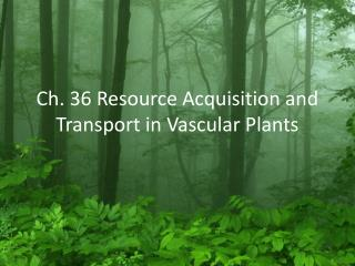 Ch. 36 Resource Acquisition and Transport in Vascular Plants