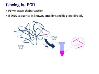 Cloning by PCR
