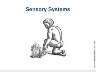 Dr W Kolbinger, Sensory Systems (2009)
