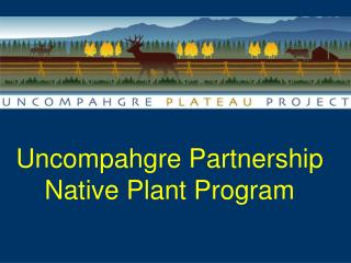 Uncompahgre Partnership Native Plant Program