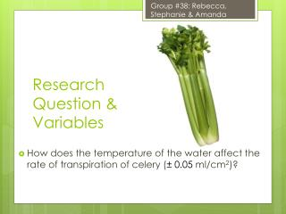 Research Question & Variables
