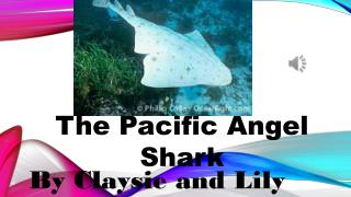 The Pacific  A ngel Shark