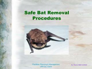 Safe Bat Removal  Procedures