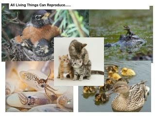All Living Things Can Reproduce......