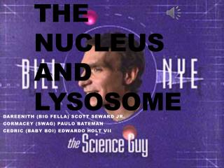 The Nucleus And Lysosome