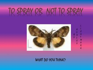 To spray or  not to spray