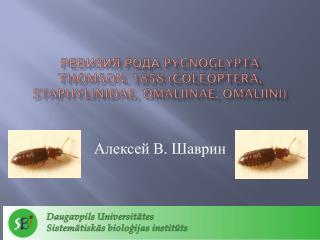 Ревизия рода  Pycnoglypta Thomson , 1858  ( Coleoptera ,  Staphylinidae ,  omaliinae ,  omaliini )