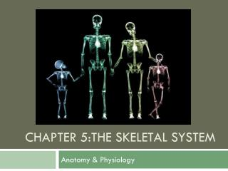 Chapter 5:The skeletal system