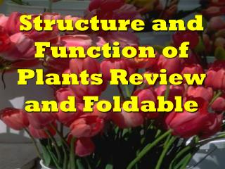 Structure and Function of Plants Review and Foldable
