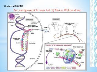 Een aardig overzicht waar het bij DNA en RNA om draait.