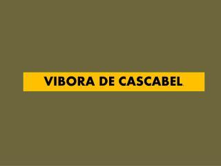 VIBORA DE CASCABEL .