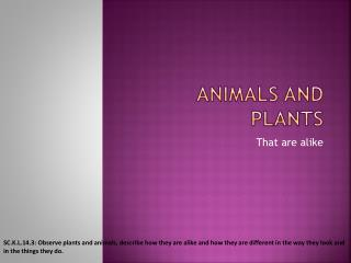 Animals and plants